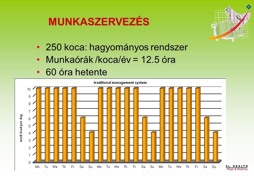 250 koca: hagyományos rendszer Munkaórák /koca/év = 12.5 óra 60 óra hetente Week 1 Week 2 Week 3 MUNKASZERVEZÉS