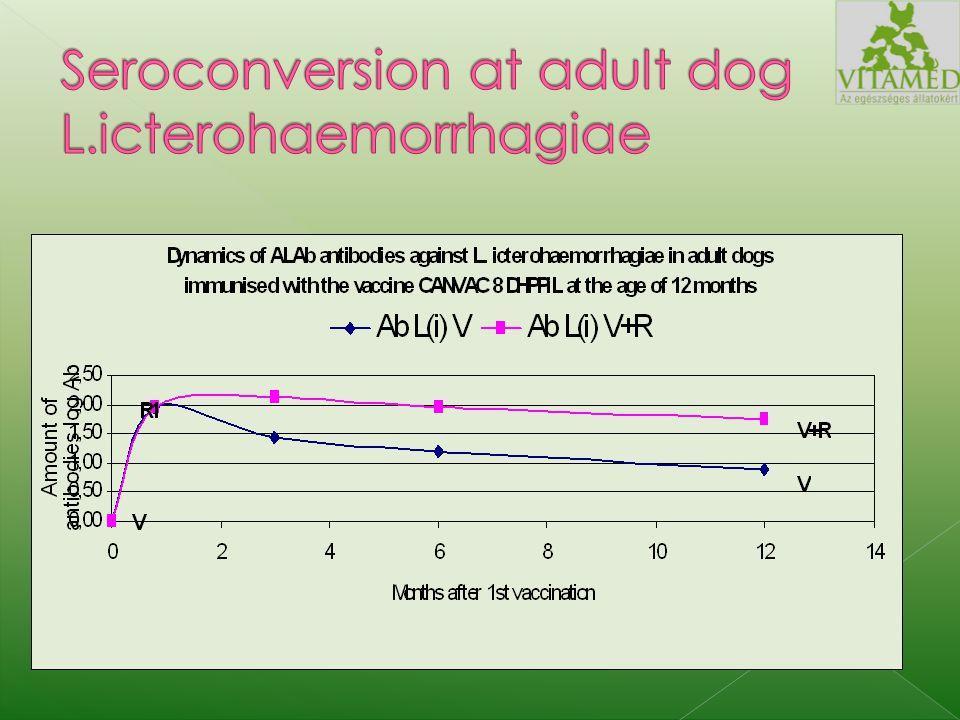 Szeropozitív (immunizált szukától származó kölyköket vakcináztak 1, 2 és 3 hónapos korukban.