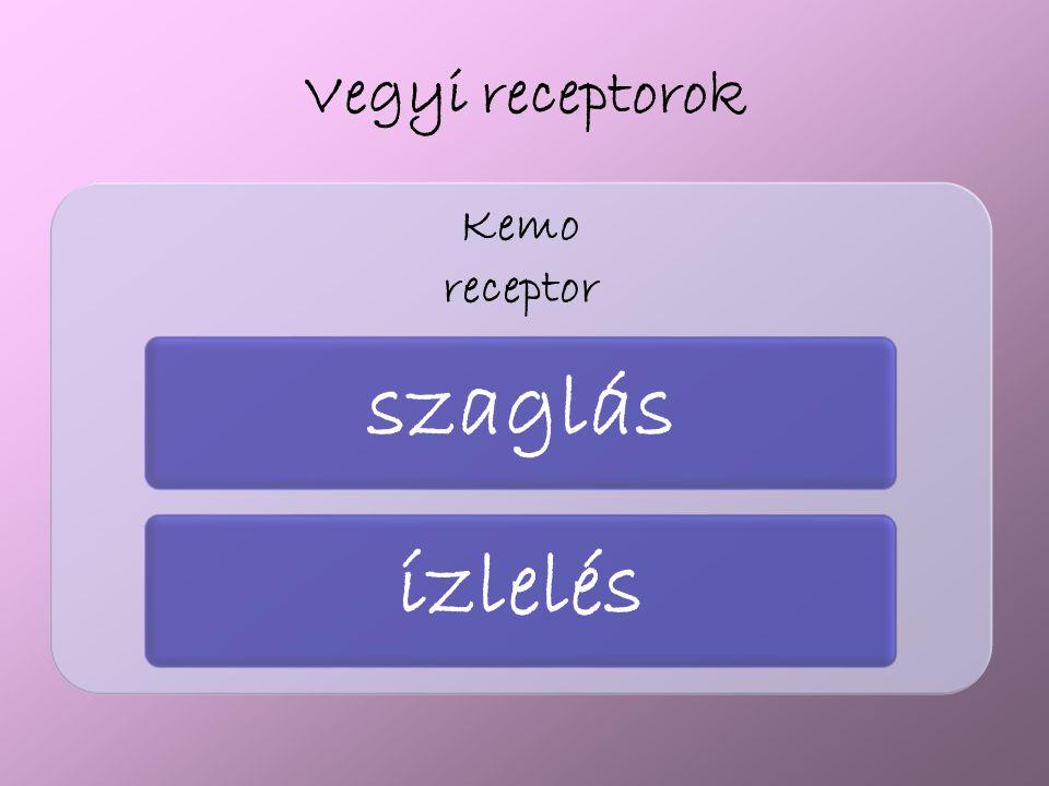 Vegyi receptorok Kemo receptor szaglásízlelés