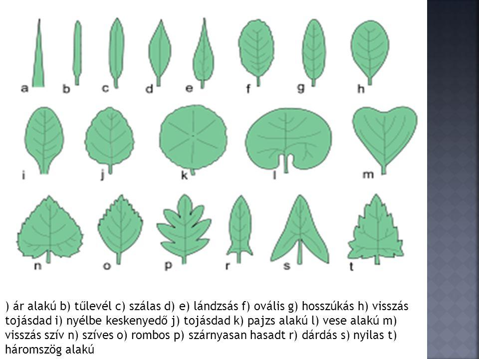 ) ár alakú b) tűlevél c) szálas d) e) lándzsás f) ovális g) hosszúkás h) visszás tojásdad i) nyélbe keskenyedő j) tojásdad k) pajzs alakú l) vese alak