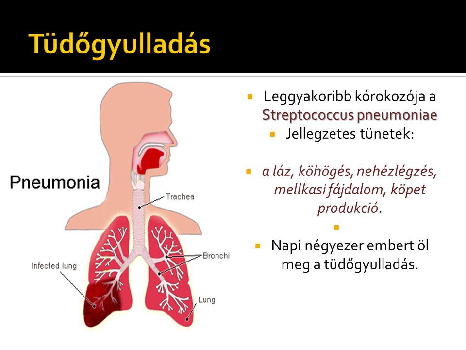 Streptococcus pneumoniae  Leggyakoribb kórokozója a Streptococcus pneumoniae  Jellegzetes tünetek:  a láz, köhögés, nehézlégzés, mellkasi fájdalom,