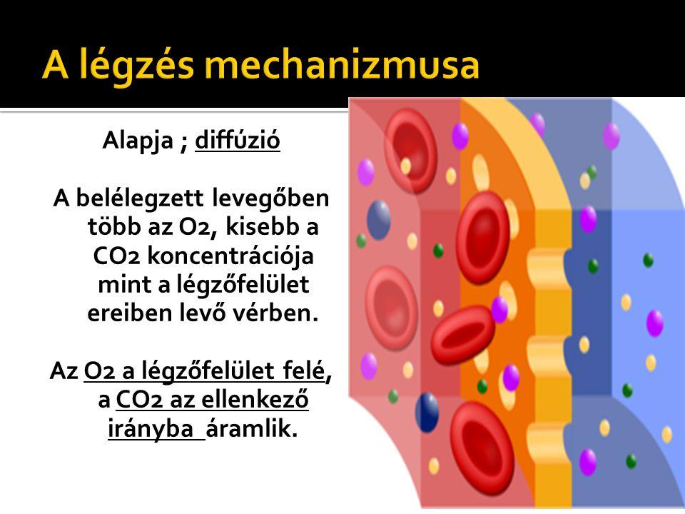 Alapja ; diffúzió A belélegzett levegőben több az O2, kisebb a CO2 koncentrációja mint a légzőfelület ereiben levő vérben. Az O2 a légzőfelület felé,