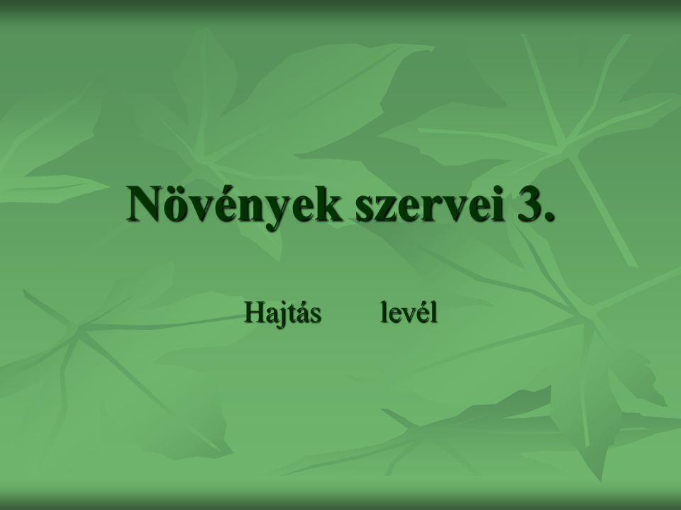Növények szervei 3. Hajtáslevél