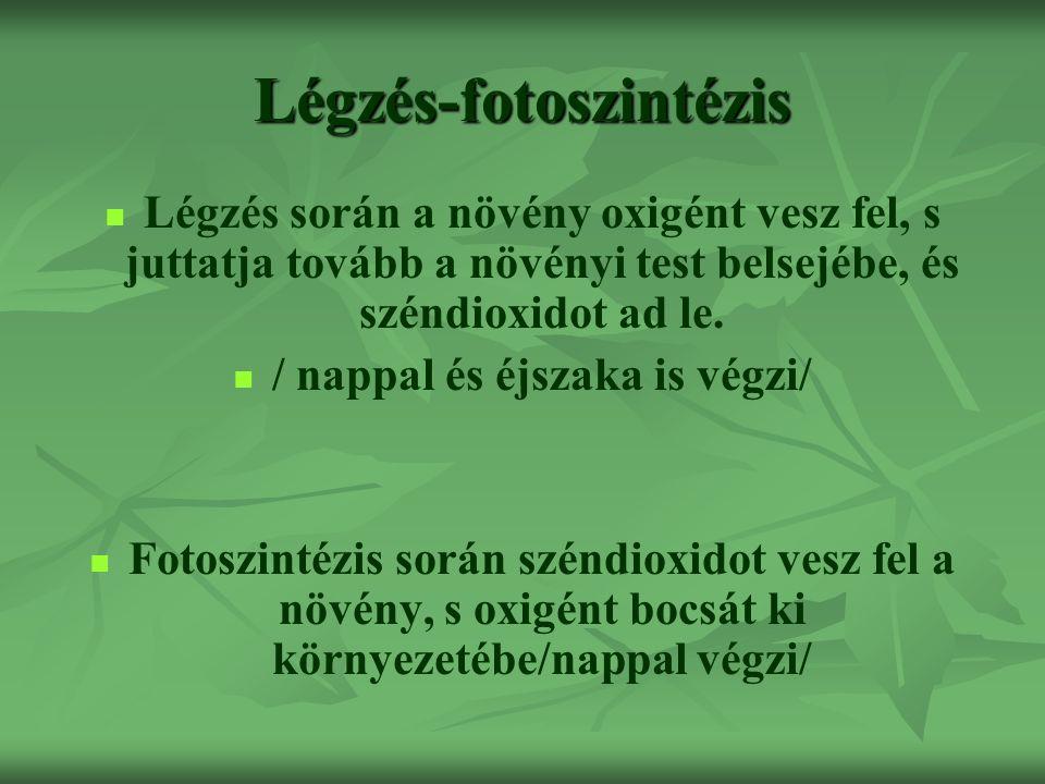 Légzés-fotoszintézis Légzés során a növény oxigént vesz fel, s juttatja tovább a növényi test belsejébe, és széndioxidot ad le. / nappal és éjszaka is