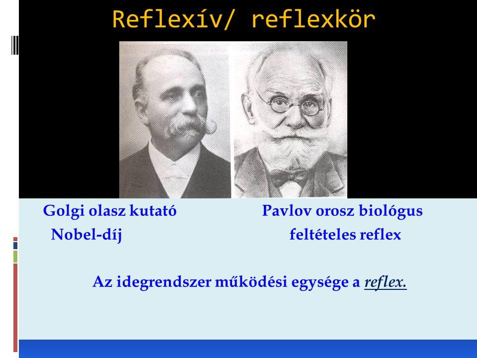 Reflexív/ reflexkör Golgi olasz kutatóPavlov orosz biológus Nobel-díj feltételes reflex Az idegrendszer működési egysége a reflex.