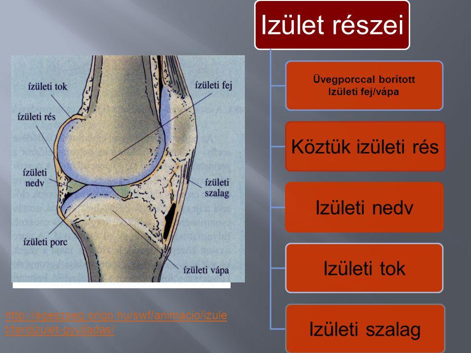 A csontok egymáshoz mozgathatóan, vagy szilárdan kapcsolódnak. Típusai; Folytonos összeköttetés (varrat, összenövés) koponyaszegycsont Félmerev összek