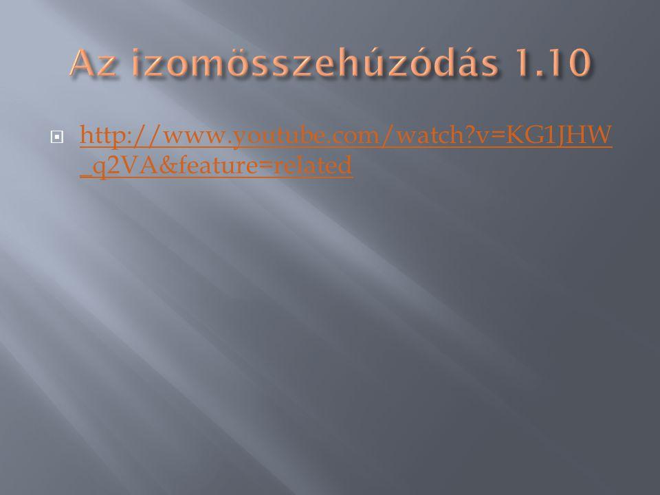 1.Izomsejt= izomrost 4.Izomköteg / 2.nyaláb Kötőszövetes izompólya 3.Erek, idegek