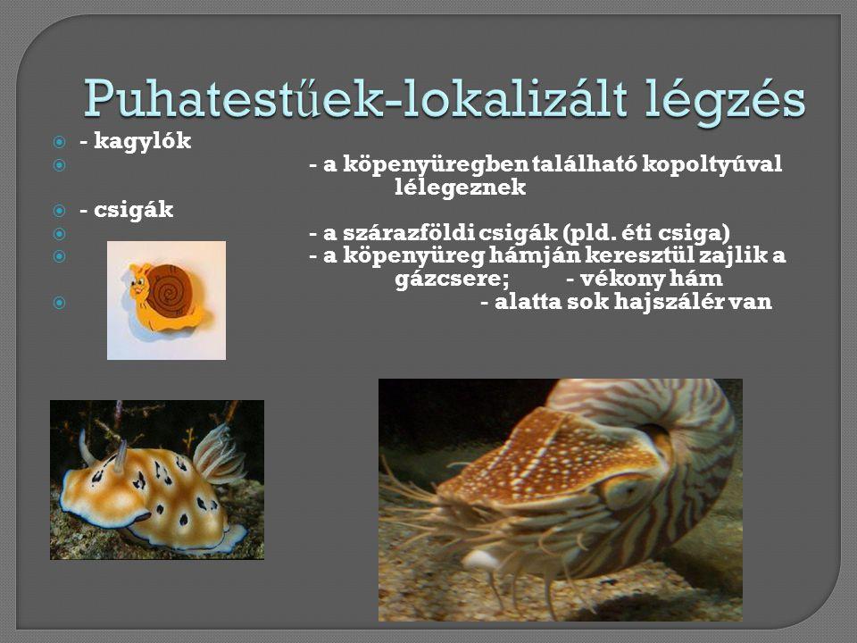  - kagylók  - a köpenyüregben található kopoltyúval lélegeznek  - csigák  - a szárazföldi csigák (pld. éti csiga)  - a köpenyüreg hámján keresztü