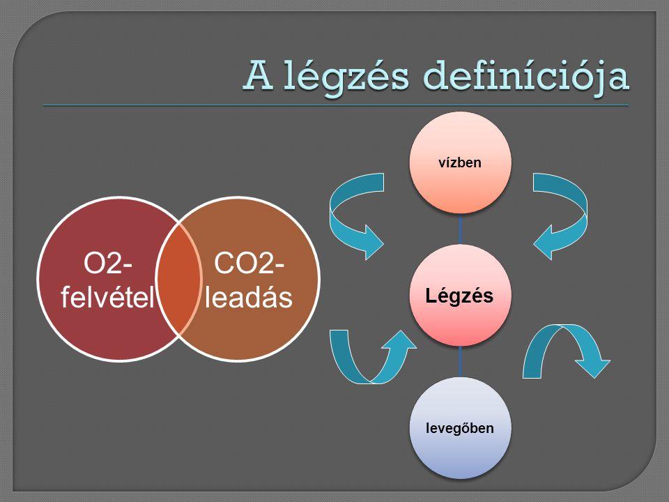 O2- felvétel CO2- leadás