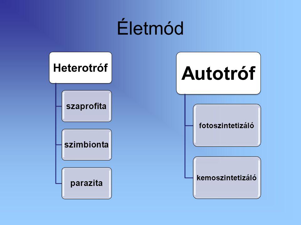 Életmód Heterotróf szaprofitaszimbiontaparazita Autotróf fotoszintetizálókemoszintetizáló