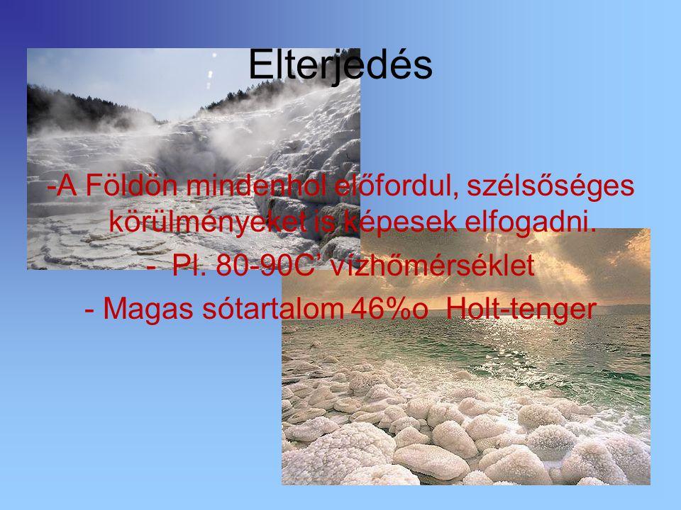 Elterjedés -A Földön mindenhol előfordul, szélsőséges körülményeket is képesek elfogadni. -Pl. 80-90C' vízhőmérséklet - Magas sótartalom 46%o Holt-ten