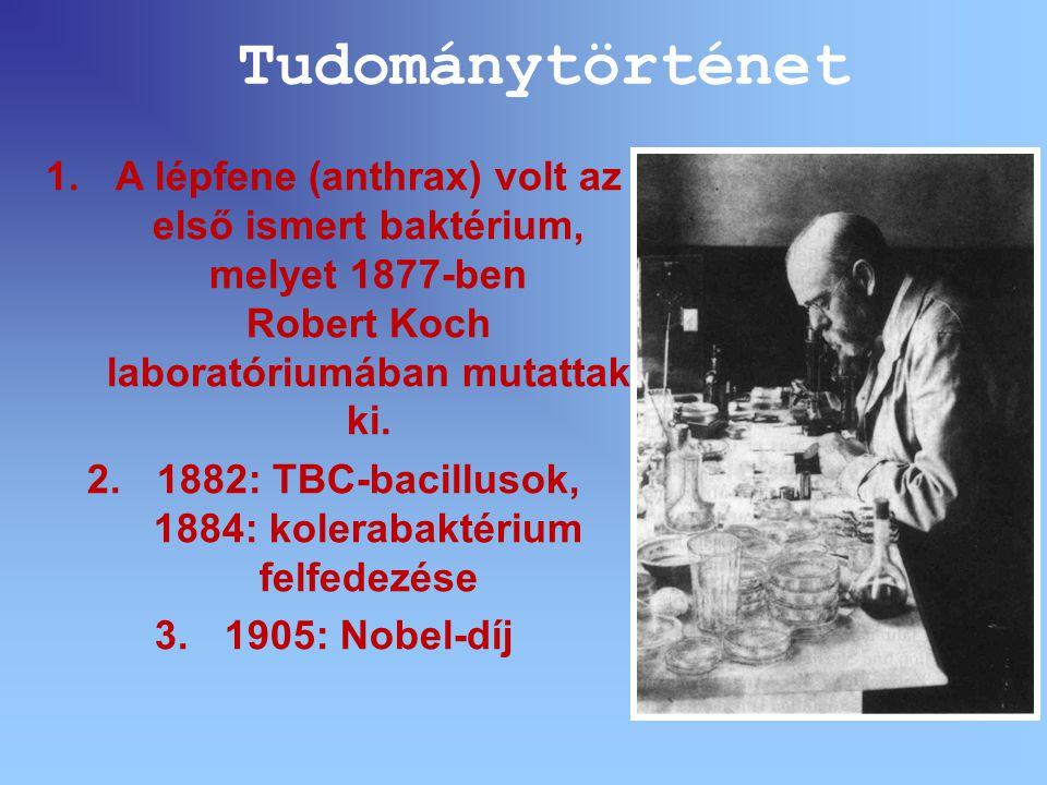 1.A lépfene (anthrax) volt az első ismert baktérium, melyet 1877-ben Robert Koch laboratóriumában mutattak ki. 2.1882: TBC-bacillusok, 1884: kolerabak