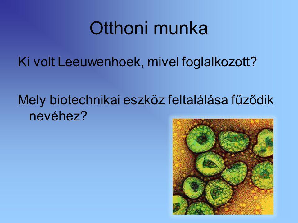 Prokarióták rendszere Prokarióták országa/domén Baktériumok törzse Kékeszöld baktériumok törzse