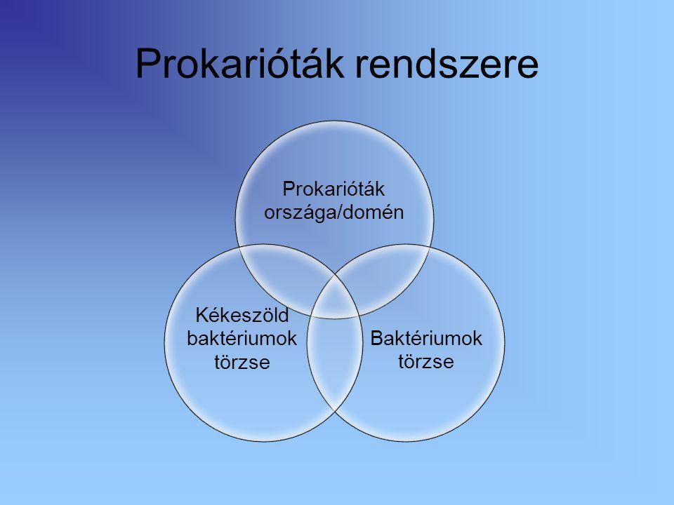 Felépítésük Méret: 1-10 mikrométer Alak: Pálcika- bacillus Gömb- coccus, Csavart- spirillum sejtfal Kocsonyás tok sejtplazma Örökítő- anyag Csilló, ostor