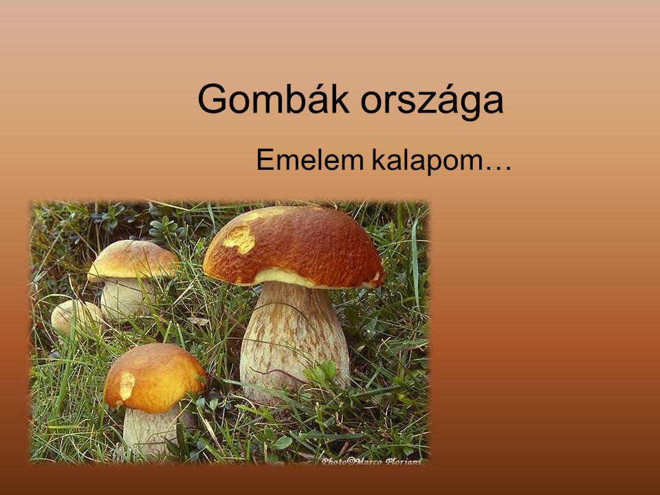 Gombák országa Emelem kalapom…