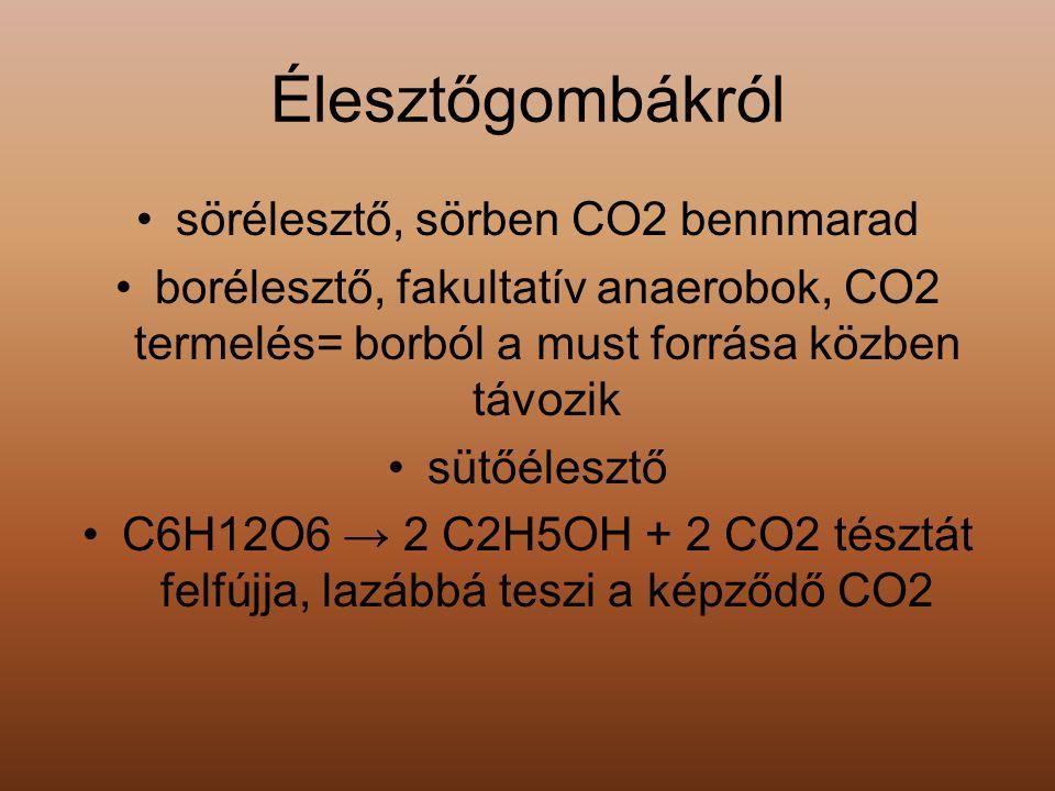 Élesztőgombákról sörélesztő, sörben CO2 bennmarad borélesztő, fakultatív anaerobok, CO2 termelés= borból a must forrása közben távozik sütőélesztő C6H
