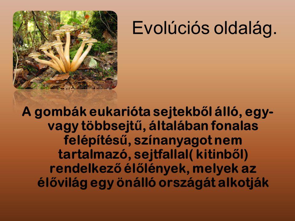 Evolúciós oldalág. A gombák eukarióta sejtekb ő l álló, egy- vagy többsejt ű, általában fonalas felépítés ű, színanyagot nem tartalmazó, sejtfallal( k