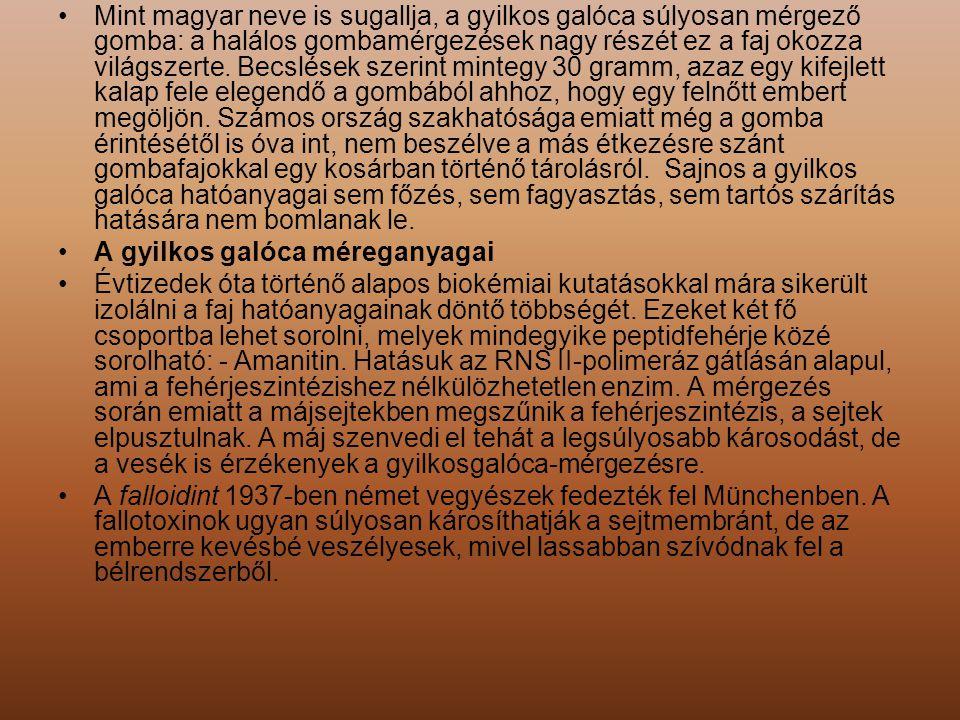 Mint magyar neve is sugallja, a gyilkos galóca súlyosan mérgező gomba: a halálos gombamérgezések nagy részét ez a faj okozza világszerte. Becslések sz