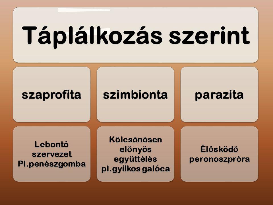 Táplálkozás szerint szaprofita Lebontó szervezet Pl.penészgomba szimbionta Kölcsönösen el ő nyös együttélés pl.gyilkos galóca parazita Él ő sköd ő per