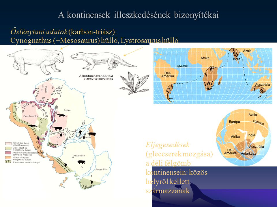 A kontinensek illeszkedésének bizonyítékai Őslénytani adatok (karbon-triász): Glossopteris magvaspáfrány A prekambriumi és paleozoikumi hegységövek lefutása Eljegesedések (gleccserek mozgása) a déli félgömb kontinensein: közös helyről kellett származzanak Cynognathus (+Mesosaurus) hüllő, Lystrosaurus hüllő