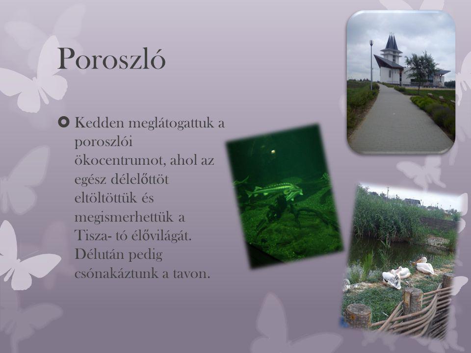 Poroszló  Kedden meglátogattuk a poroszlói ökocentrumot, ahol az egész délel ő ttöt eltöltöttük és megismerhettük a Tisza- tó él ő világát.