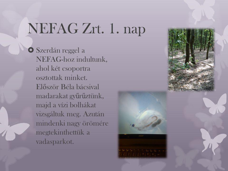 NEFAG Zrt. 1. nap  Szerdán reggel a NEFAG-hoz indultunk, ahol két csoportra osztottak minket.