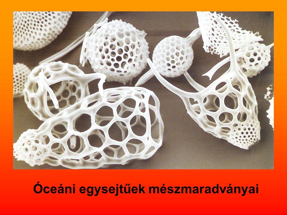 Óceáni egysejtűek mészmaradványai