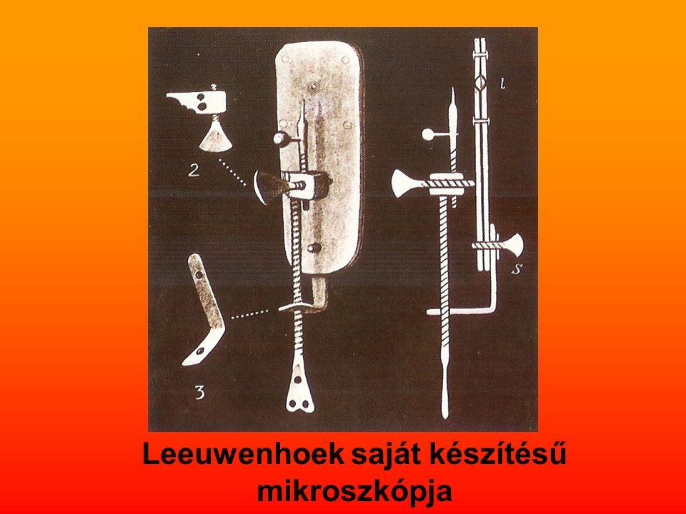 Leeuwenhoek saját készítésű mikroszkópja