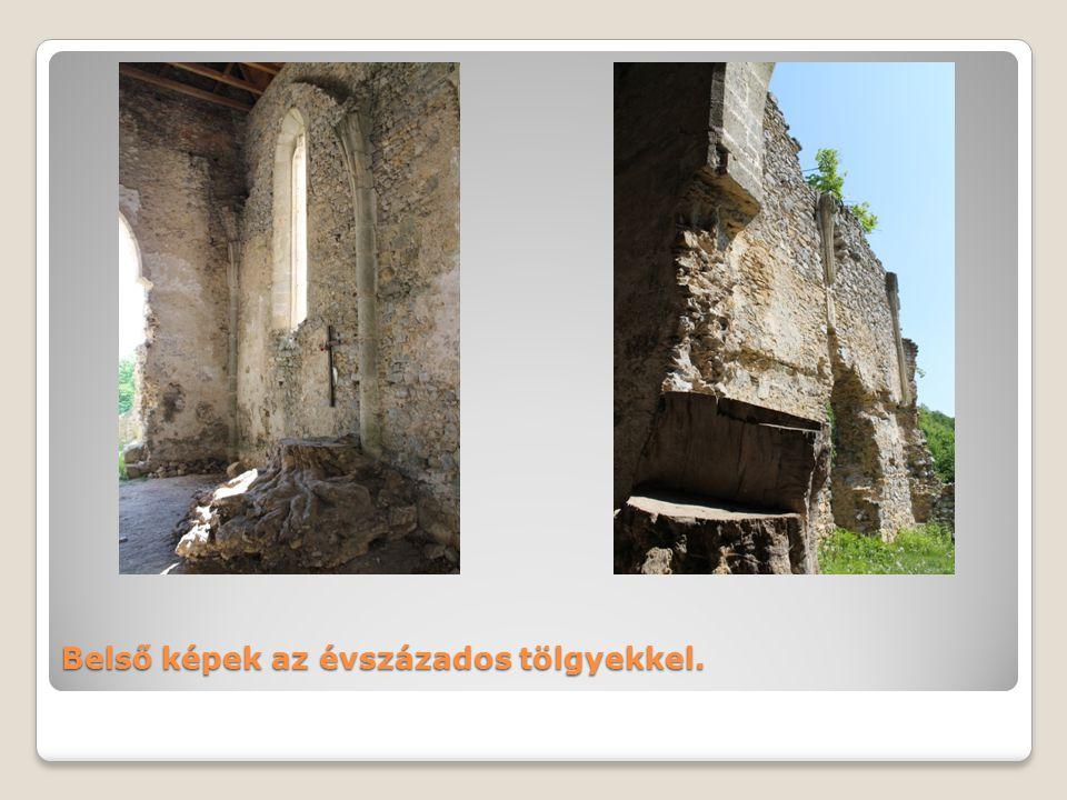Belső képek az évszázados tölgyekkel.