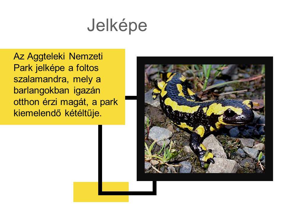 Jelképe Az Aggteleki Nemzeti Park jelképe a foltos szalamandra, mely a barlangokban igazán otthon érzi magát, a park kiemelendő kétéltűje.