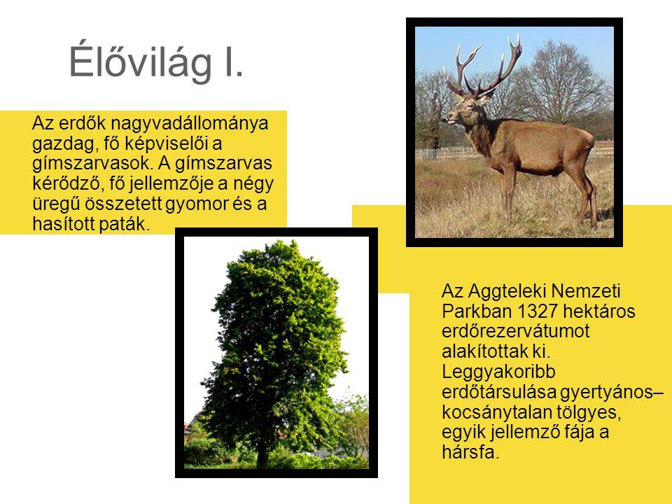 Élővilág I. Az erdők nagyvadállománya gazdag, fő képviselői a gímszarvasok. A gímszarvas kérődző, fő jellemzője a négy üregű összetett gyomor és a has