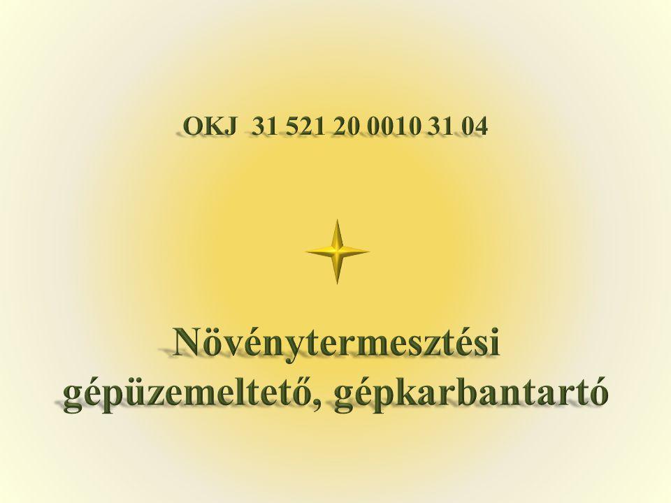 1.1.Karizs Róbert Békés Megyei Tisza Kálmán Közoktatási Intézmény Orosháza, Kossuth tér 1.