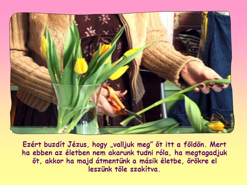 Őt egyedül az érdekli, hogy célba érjünk, vagyis hogy örökké Istennel éljünk.