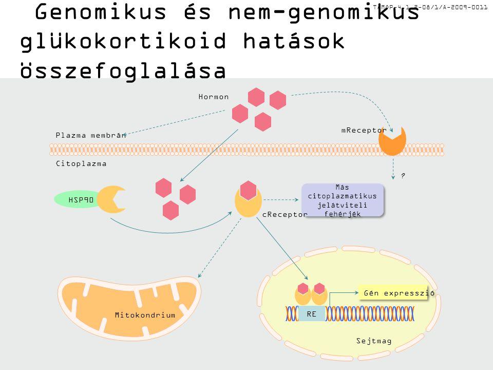 TÁMOP-4.1.2-08/1/A-2009-0011 Genomikus és nem-genomikus glükokortikoid hatások összefoglalása RE Plazma membrán Sejtmag Más citoplazmatikus jelátvitel