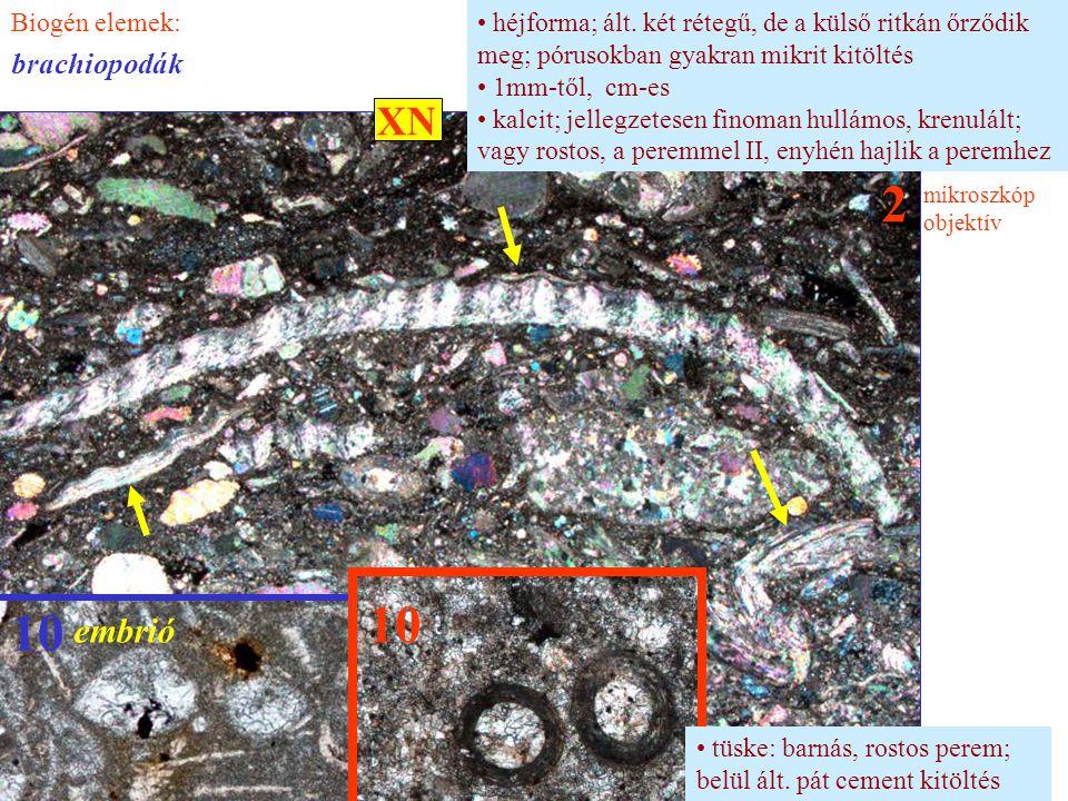 héjforma; ált. két rétegű, de a külső ritkán őrződik meg; pórusokban gyakran mikrit kitöltés 1mm-től, cm-es kalcit; jellegzetesen finoman hullámos, kr