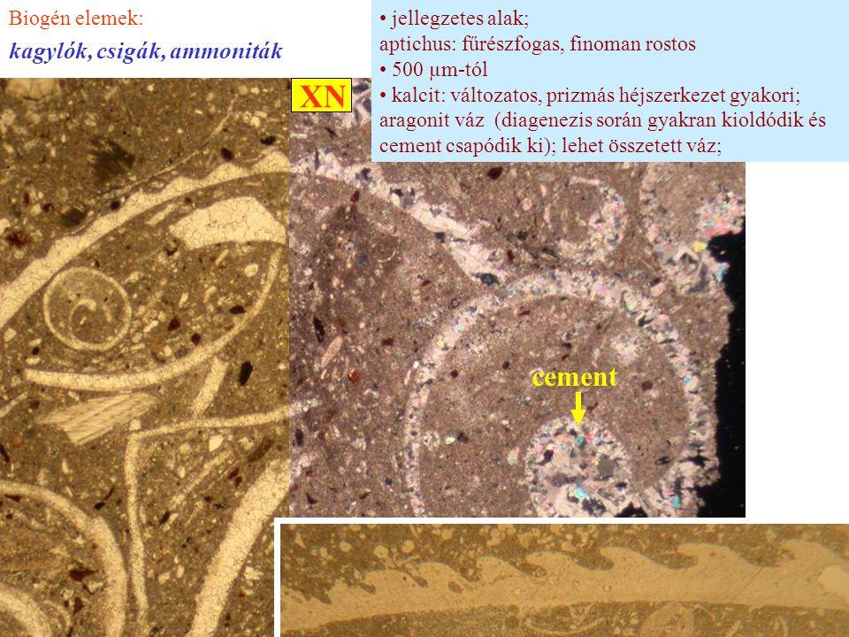 jellegzetes alak; aptichus: fűrészfogas, finoman rostos 500 µm-tól kalcit: változatos, prizmás héjszerkezet gyakori; aragonit váz (diagenezis során gy