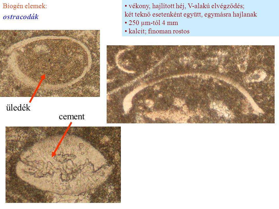 vékony, hajlított héj, V-alakú elvégződés; két teknő esetenként együtt, egymásra hajlanak 250 µm-tól 4 mm kalcit; finoman rostos Biogén elemek: ostrac