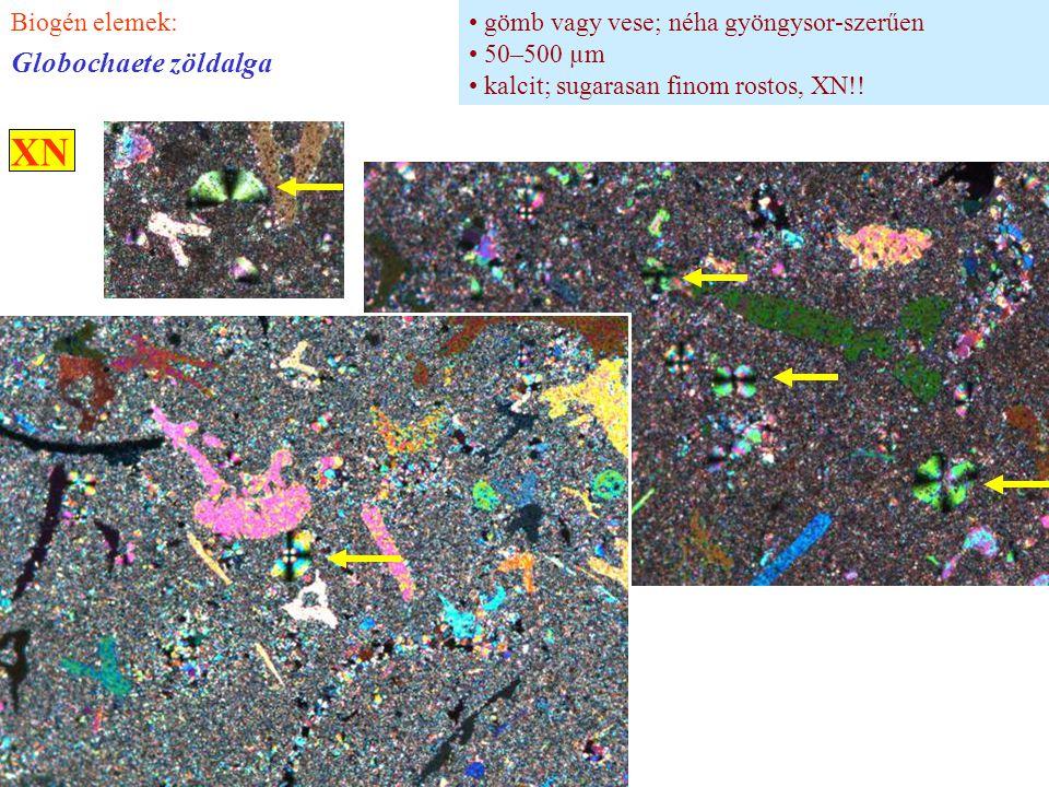 gömb vagy vese; néha gyöngysor-szerűen 50–500 µm kalcit; sugarasan finom rostos, XN!! Biogén elemek: Globochaete zöldalga XN
