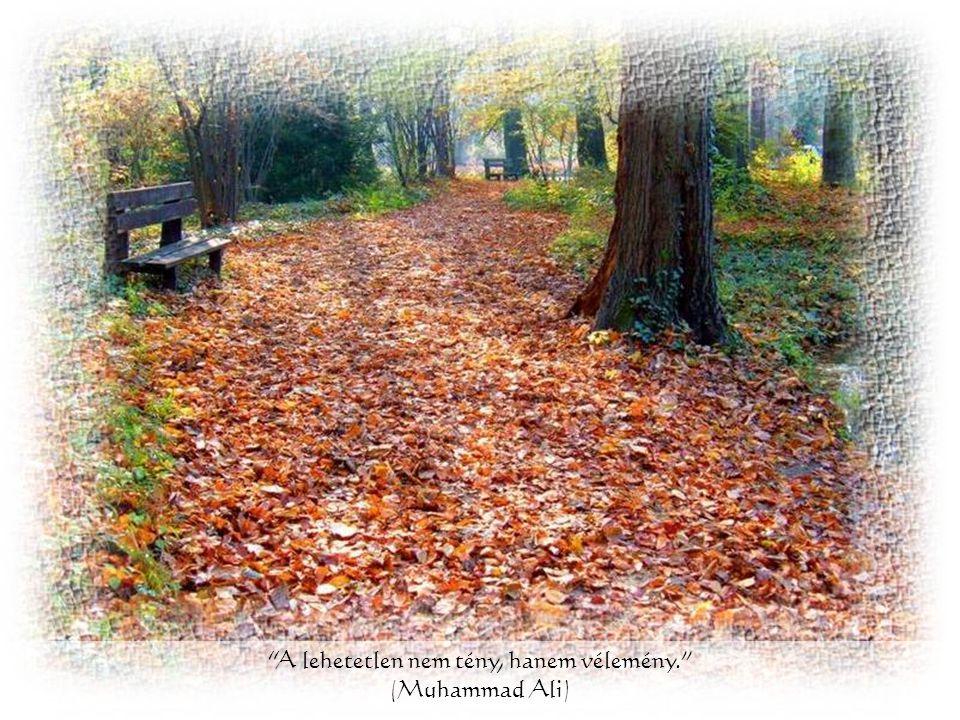 Az akadály, maga az út. (Zen bölcsesség)