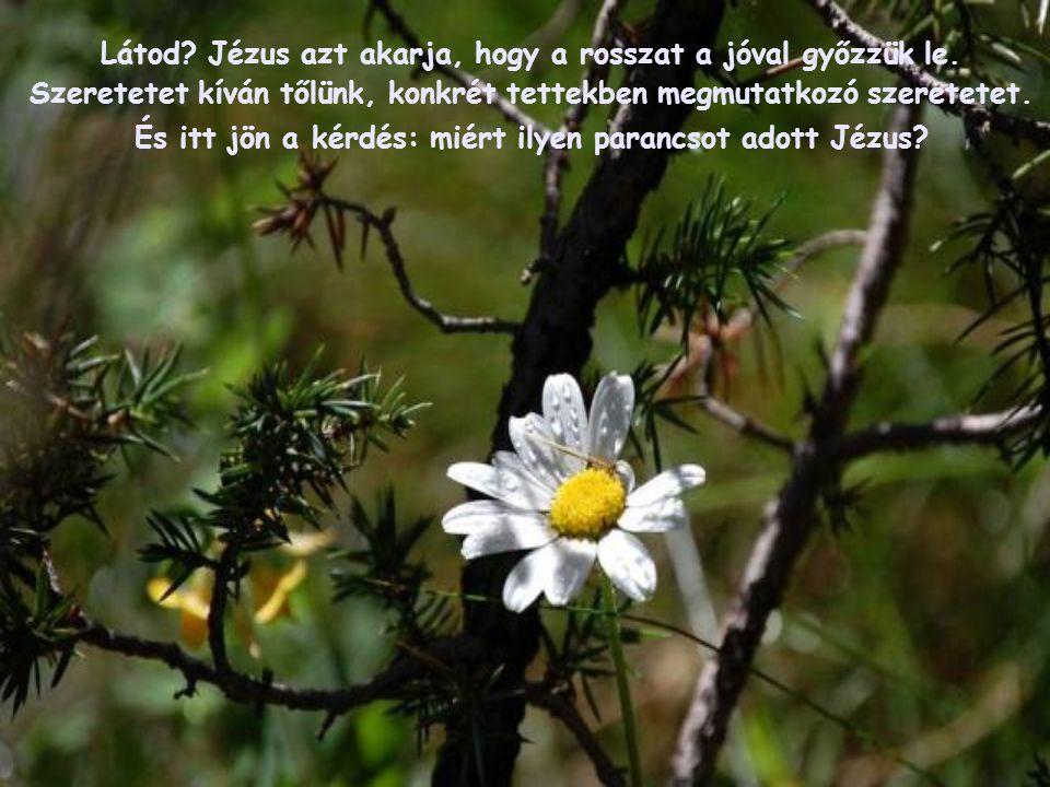 """""""Szeressétek ellenségeiteket, tegyetek jót haragosaitokkal! Azokra, akik átkoznak benneteket, mondjatok áldást, és imádkozzatok rágalmazóitokért!"""""""
