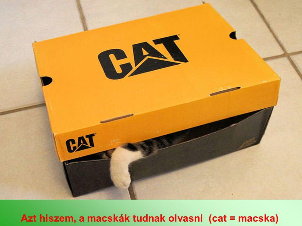 Azt hiszem, a macskák tudnak olvasni (cat = macska)