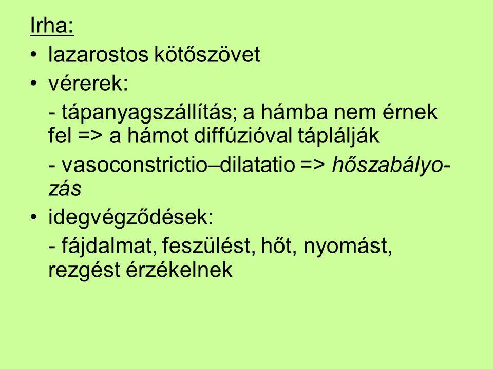 Irha: lazarostos kötőszövet vérerek: - tápanyagszállítás; a hámba nem érnek fel => a hámot diffúzióval táplálják - vasoconstrictio–dilatatio => hőszab
