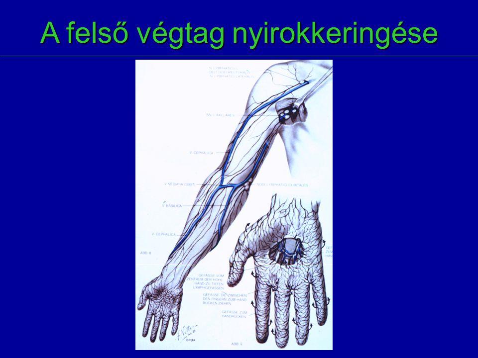 A gyulladás szakaszai  Első szakasz  serum diapedesis  plasma diapedesis  lympho- és monocyta diapedesis  Második szakasz  retyculoendothelialis rendszer (RES) aktiválódik  fagocytosis  Harmadik szakasz  proliferáció: nagyfokú kötőszövet felszaporodás