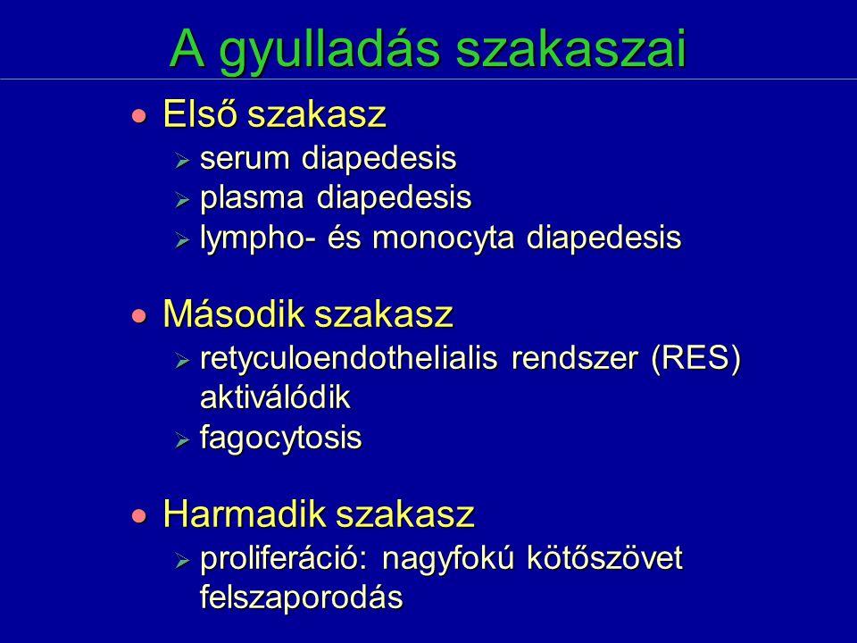 A gyulladás szakaszai  Első szakasz  serum diapedesis  plasma diapedesis  lympho- és monocyta diapedesis  Második szakasz  retyculoendothelialis