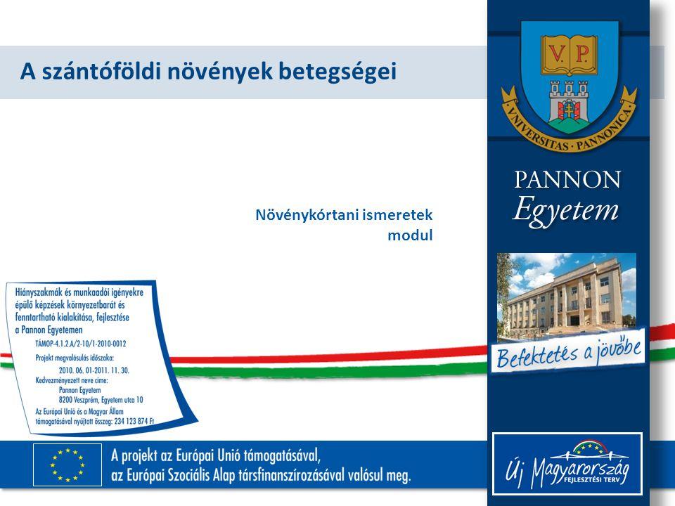 TÁMOP-4.1.2.A/2-10/1-2010-0012 Tünetek A levélhüvelyen 2-4 cm-es megnyúlt zöldesszürke, sötétbarna szegélyű foltok.