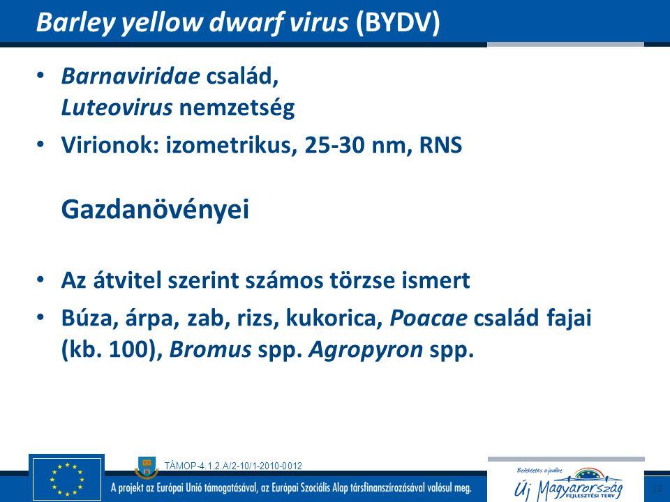 TÁMOP-4.1.2.A/2-10/1-2010-0012 Barnaviridae család, Luteovirus nemzetség Virionok: izometrikus, 25-30 nm, RNS Gazdanövényei Az átvitel szerint számos