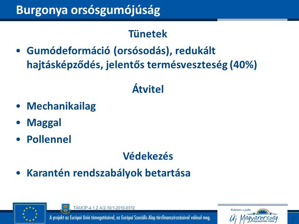 TÁMOP-4.1.2.A/2-10/1-2010-0012 Tünetek Gumódeformáció (orsósodás), redukált hajtásképződés, jelentős termésveszteség (40%) Átvitel Mechanikailag Magga