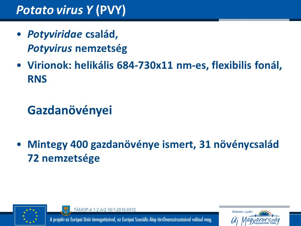 TÁMOP-4.1.2.A/2-10/1-2010-0012 Potyviridae család, Potyvirus nemzetség Virionok: helikális 684-730x11 nm-es, flexibilis fonál, RNS Gazdanövényei Minte