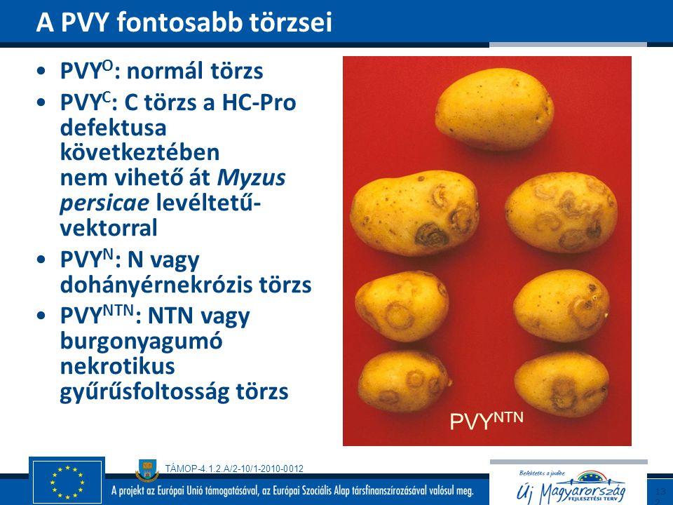 TÁMOP-4.1.2.A/2-10/1-2010-0012 PVY O : normál törzs PVY C : C törzs a HC-Pro defektusa következtében nem vihető át Myzus persicae levéltetű- vektorral