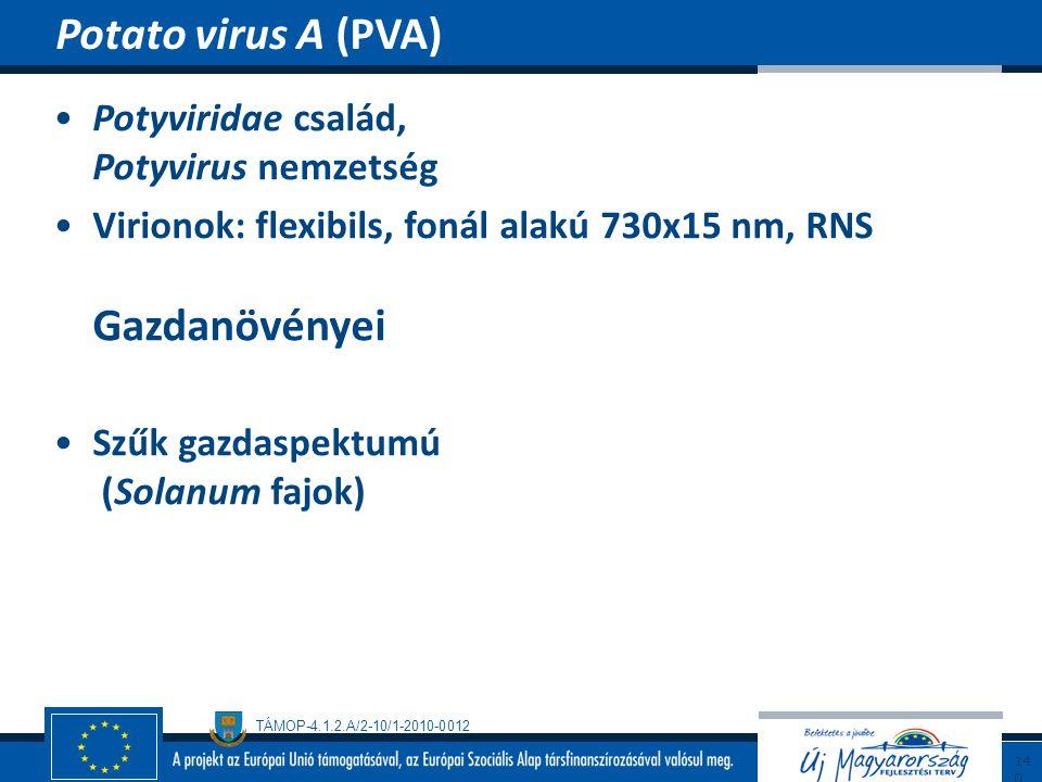 TÁMOP-4.1.2.A/2-10/1-2010-0012 Potyviridae család, Potyvirus nemzetség Virionok: flexibils, fonál alakú 730x15 nm, RNS Gazdanövényei Szűk gazdaspektum